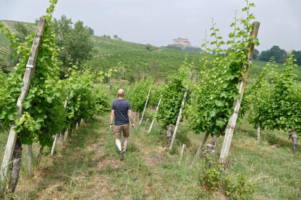Vineyards Lamoretti
