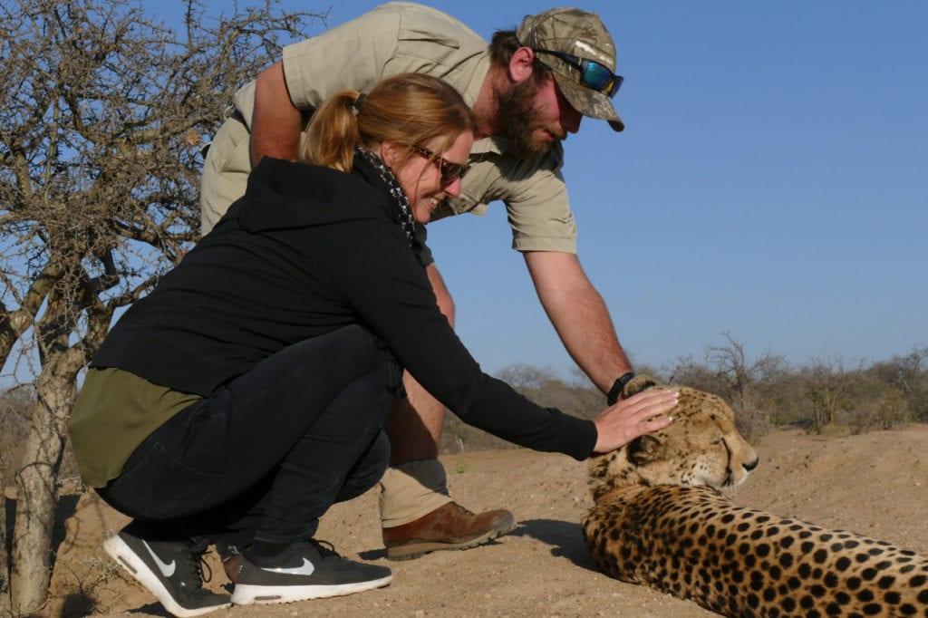 Petting cheetah