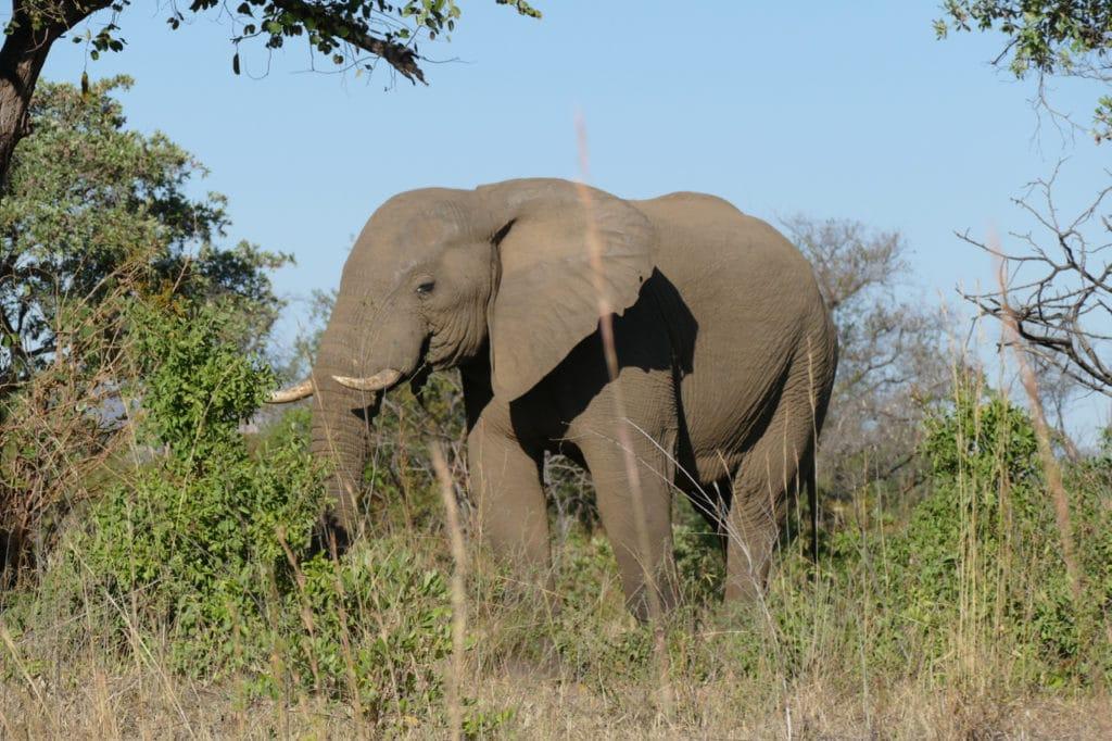 Safari near Kruger