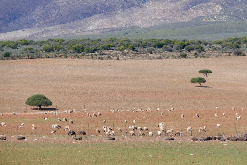 Klein Karoo Oudtshoorn
