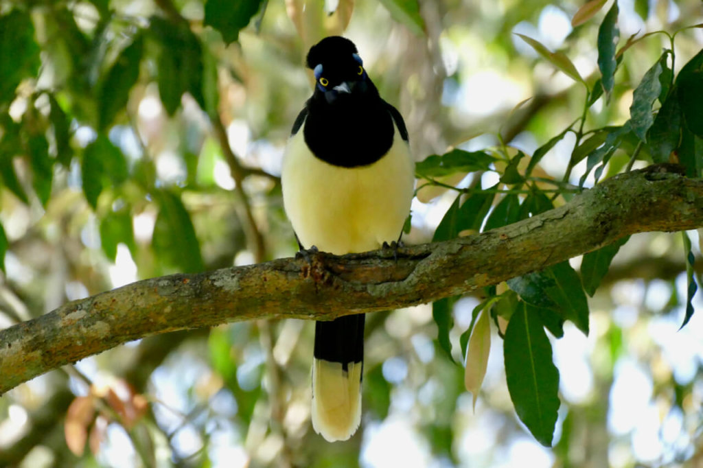 Bird Iguazu