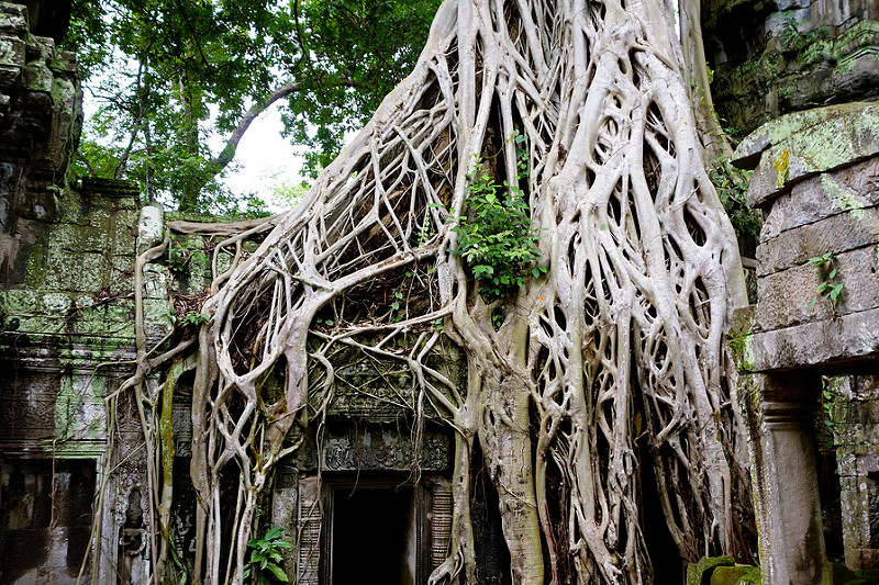 Trees And Temples Famous Ta Prohm Act Of Traveling