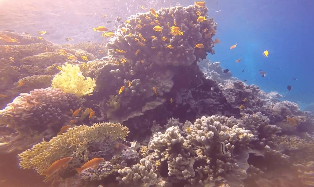Coral reef Aqaba