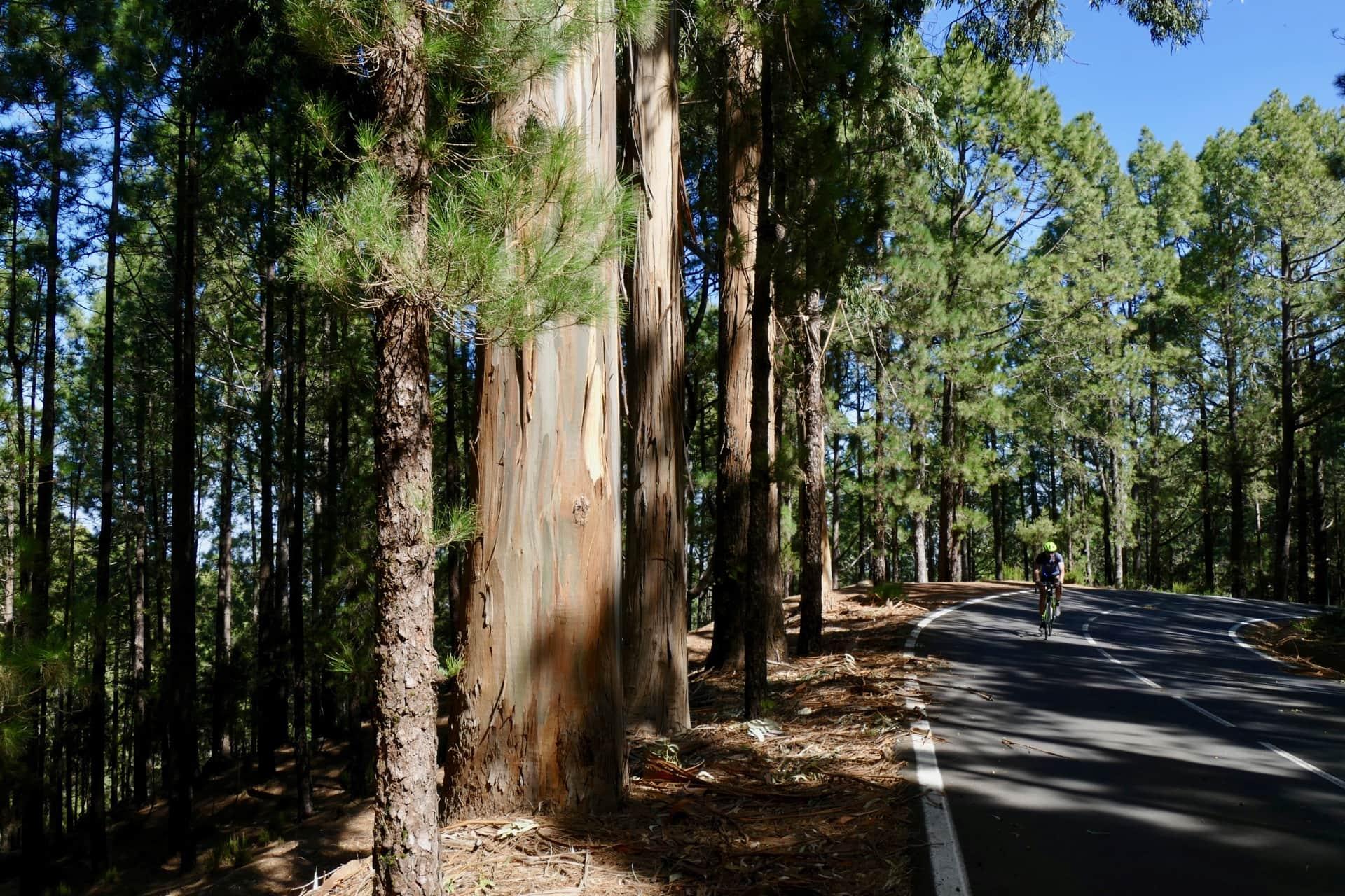 Teide National Park roads